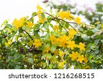 beautiful yellow flowers with... | Shutterstock . vector #1216268515