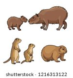 Set  2 Of Rodents   Vector...
