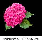 Pink Hydrangea Flower With...