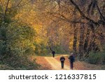 colorful autumn forest with... | Shutterstock . vector #1216337815