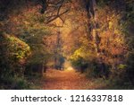 photo of colorful autumn forest  | Shutterstock . vector #1216337818