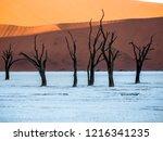 dead camel thorn trees  ... | Shutterstock . vector #1216341235