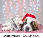 Stock photo saint bernard puppy in red christmas hat hugging kittens 1216345828