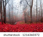 red autumn fog forest mist... | Shutterstock . vector #1216360372