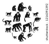 monkey types icons set. simple... | Shutterstock . vector #1216391392