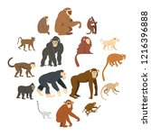 monkey types icons set in flat... | Shutterstock . vector #1216396888