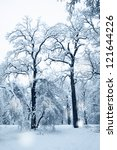 two old oak trees in the snow ... | Shutterstock . vector #121644226