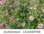 closeup of pink flowers and...   Shutterstock . vector #1216469458