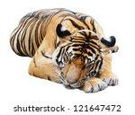 Sleeping Tiger  Isolated On...