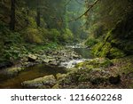 hiking impression in the black... | Shutterstock . vector #1216602268