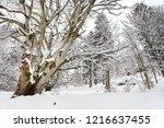winter in schwarzwald. winter...   Shutterstock . vector #1216637455