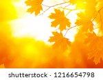 autumn landscape with bright... | Shutterstock . vector #1216654798