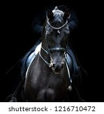 Stock photo black dressage horse of trakehner breed portrait on black background 1216710472