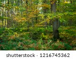autumnal leaves dress in the...   Shutterstock . vector #1216745362
