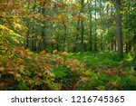 leaves dress in autumnal colors ...   Shutterstock . vector #1216745365