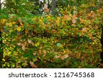 tree branches with colorful...   Shutterstock . vector #1216745368