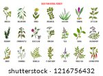 back pain herbal remedy. hand... | Shutterstock .eps vector #1216756432