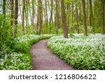 a road through the green summer ...   Shutterstock . vector #1216806622