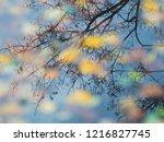fallen from a tree leaves on... | Shutterstock . vector #1216827745