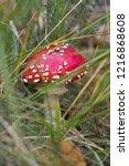 fly agaric mushroom   toadstool ... | Shutterstock . vector #1216868608