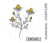 chamomile. vector illustration...   Shutterstock .eps vector #1216911298