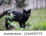 Small photo of black cat with the watchful eye, aloof in the nature