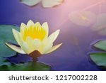 yellow lotus water lily... | Shutterstock . vector #1217002228