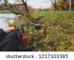 perch fish. russian bass on a... | Shutterstock . vector #1217103385