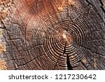 wood in section texture ...   Shutterstock . vector #1217230642