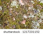 forest moss texture  green...   Shutterstock . vector #1217231152