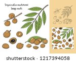 sapindus mukorossi  soap nuts ... | Shutterstock .eps vector #1217394058