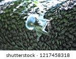 eastern gray squirrel  sciurus...   Shutterstock . vector #1217458318