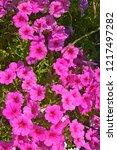 close up of a flower border... | Shutterstock . vector #1217497282