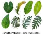 Tropical Leaves Set Plant Isolated - Fine Art prints