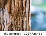 the texture of an old tree | Shutterstock . vector #1217726458