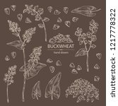 collection of buckwheat  plant... | Shutterstock .eps vector #1217778322