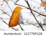 one leaf left on the tree  ... | Shutterstock . vector #1217789128