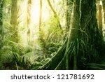 morning sunlight in tropical...   Shutterstock . vector #121781692