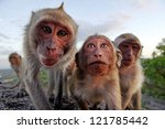 family of monkeys looking at...   Shutterstock . vector #121785442
