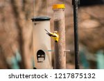 american gold finch eating from ... | Shutterstock . vector #1217875132