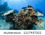 bleached and dead coral reefs... | Shutterstock . vector #1217937322