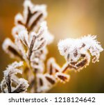 frozen last autumn leaves in... | Shutterstock . vector #1218124642