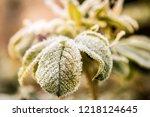 frozen last autumn leaves in... | Shutterstock . vector #1218124645