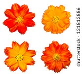 Stock photo orange cosmos flower isolated on white 121812886