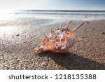 shells on the beach in summer | Shutterstock . vector #1218135388