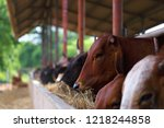 agriculture industry. late... | Shutterstock . vector #1218244858