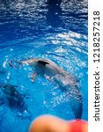 Bottlenose Dolphin Playing Wit...