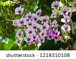 beautiful white and violet... | Shutterstock . vector #1218310108