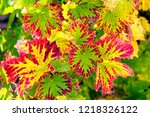 colorful autumn leaves in... | Shutterstock . vector #1218326122