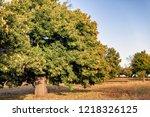 mature chestnut trees in... | Shutterstock . vector #1218326125